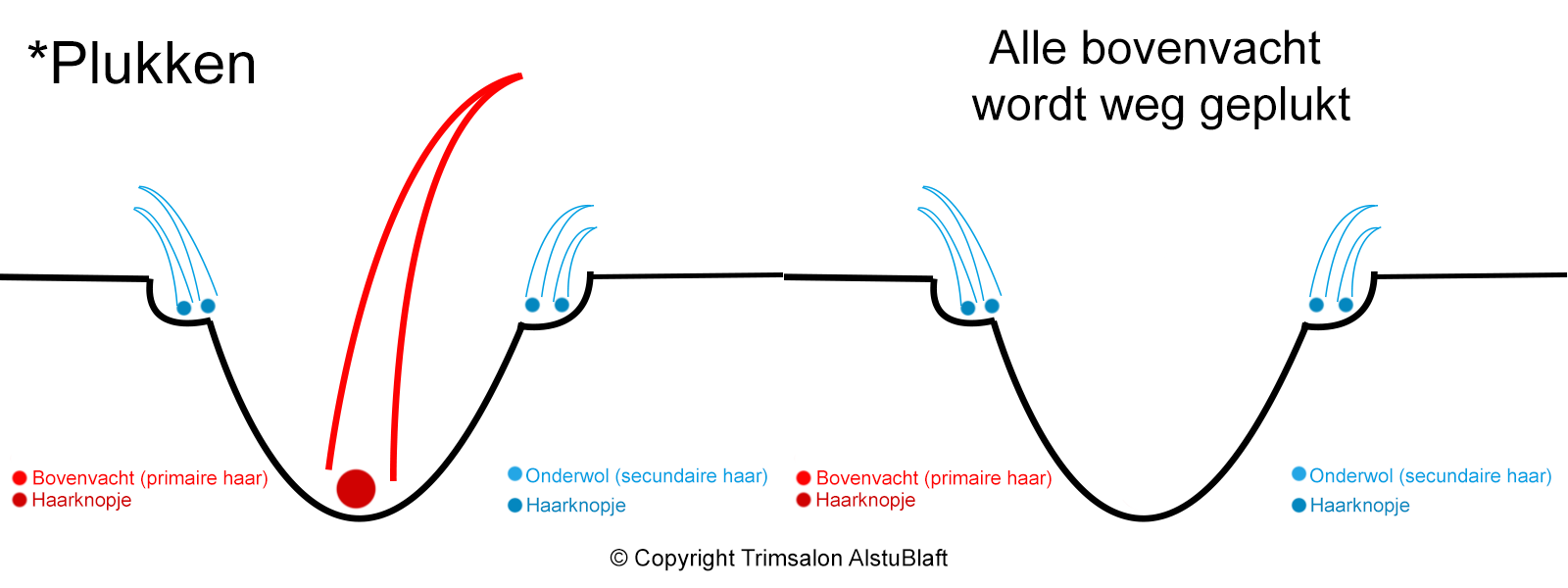 samenvatting plukken copyright trimsalon AlstuBlaft